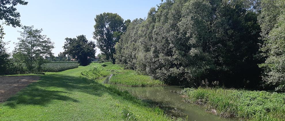 Maggiore biodiversità lungo i canali consortili. Scolo Gallesello in comune di Scorzè